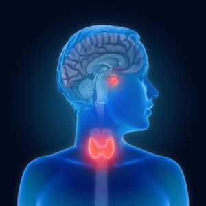 tireoide saudável importante para nosso corpo